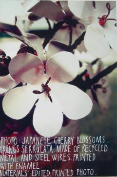 Japanese Cherry Blossom. No. 057
